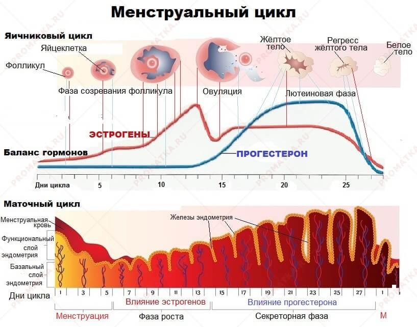 Масляный прогестерон — как правильно колоть