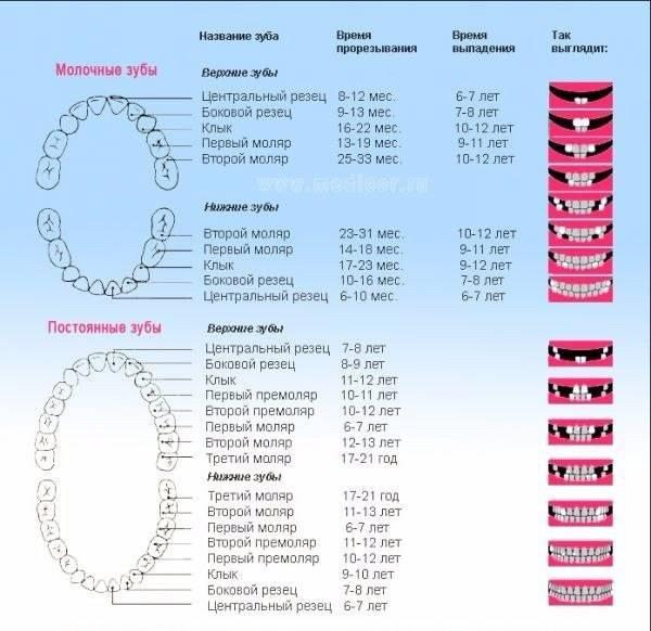 Порядок прорезывания зубов