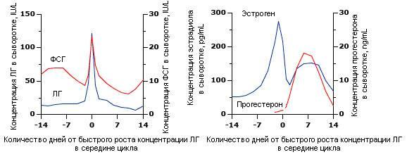 Норма фсг у женщин по возрасту. таблица гормона, как посчитать в первой фазе цикла, при беременности, менопаузе. расшифровка анализа
