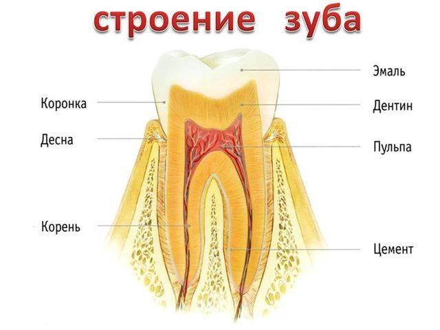 Сломался съемный зубной протез — что делать?