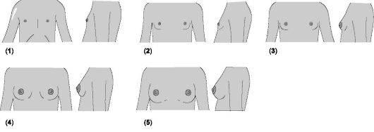 Как долго растет грудь у женщин: основные этапы и факторы