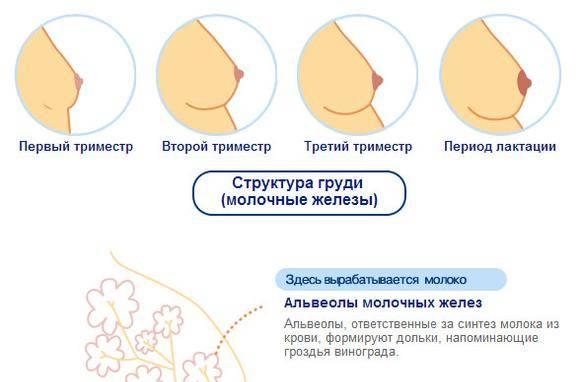 Причины, по которым после месячных болит грудь