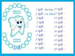Почему зубы у ребенка лезут не по порядку