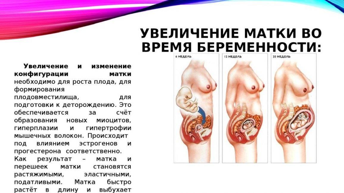 Биоревитализация при беременности – можно ли делать или нельзя?