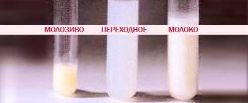 Выделения из груди при беременности: прозрачные, желтые и белые