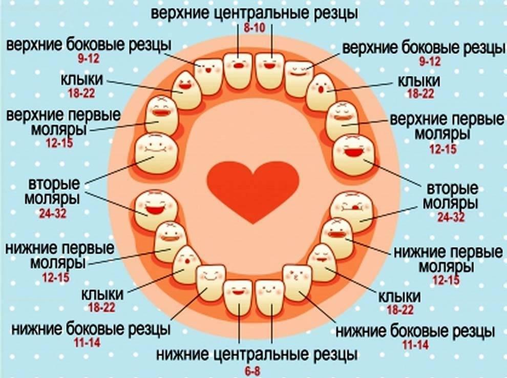Прорезывание клыков — где находятся глазные зубы и когда они режутся у детей: симптомы с фото