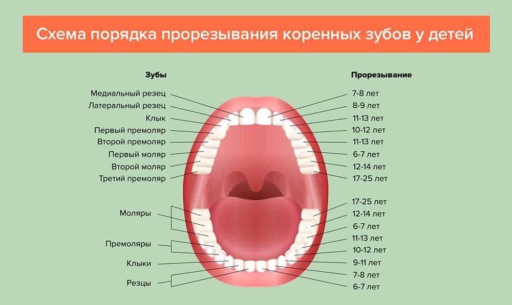 Когда ждать первые потери? молочные зубы у детей – схема выпадения
