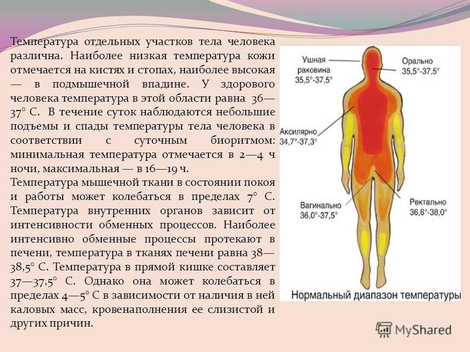 Что делать при низкой температуре тела 35.5 у взрослого?