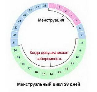 Овуляция при менструальном цикле в 21-23 дня. как рассчитать, когда максимально высока вероятность зачатия ребенка?