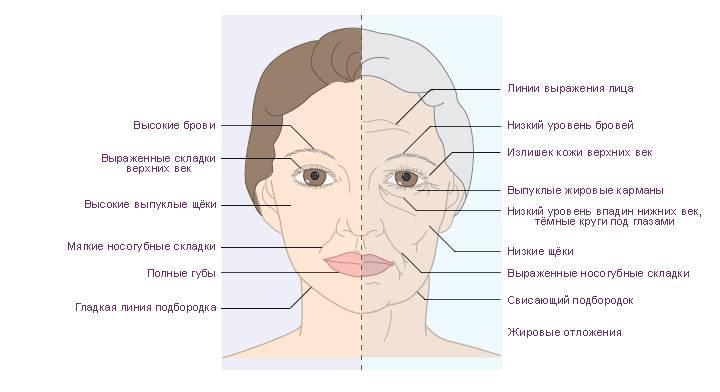 Как меняется лицо с возрастом — возрастные изменения и старение лица