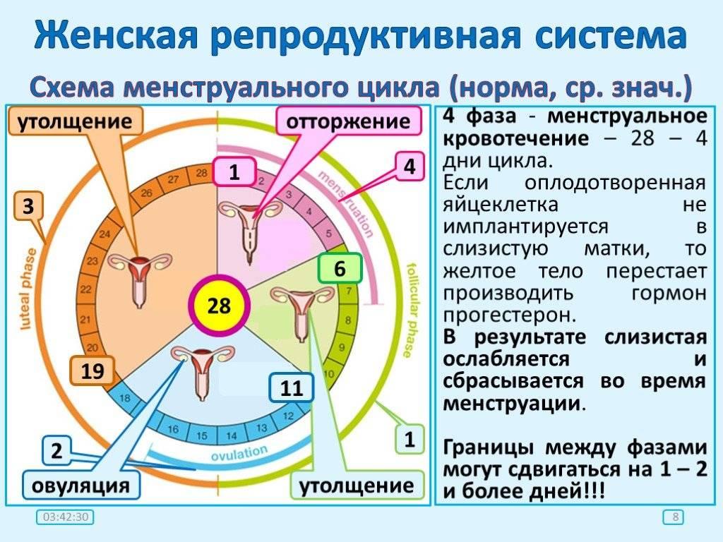 Нарушение менструального цикла: что нужно знать