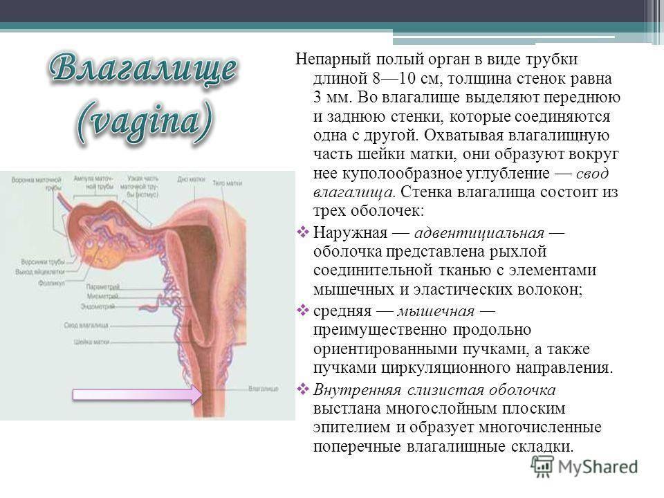 Обследование у гинеколога: все про гинекологический осмотр