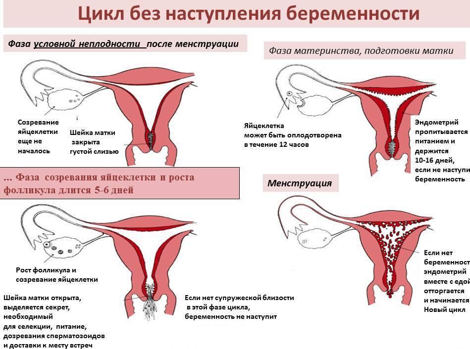 Причины учащения мочеиспускания на фоне задержки менструации