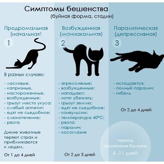 Проблемы с зубами у кошек