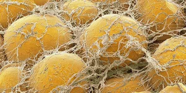адипоциты