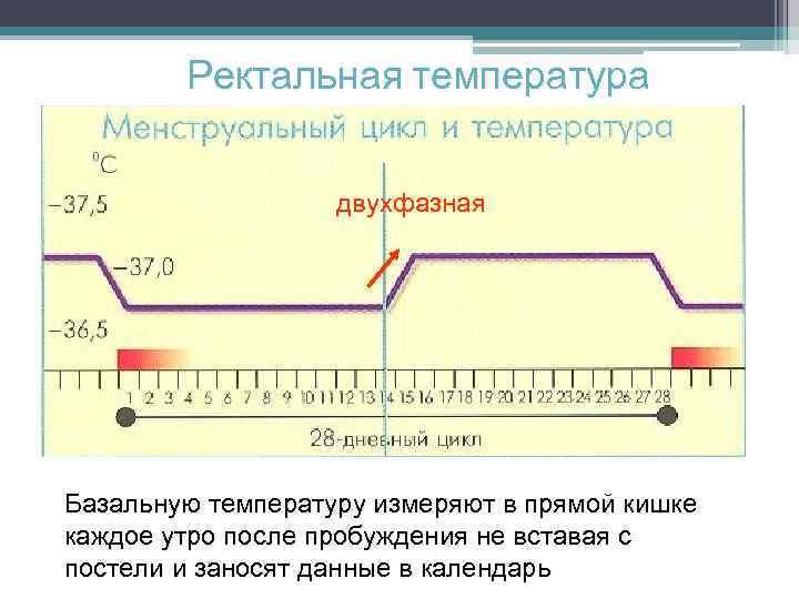 7 правил как правильно измерять базальную температуру, чтобы получить точный результат?