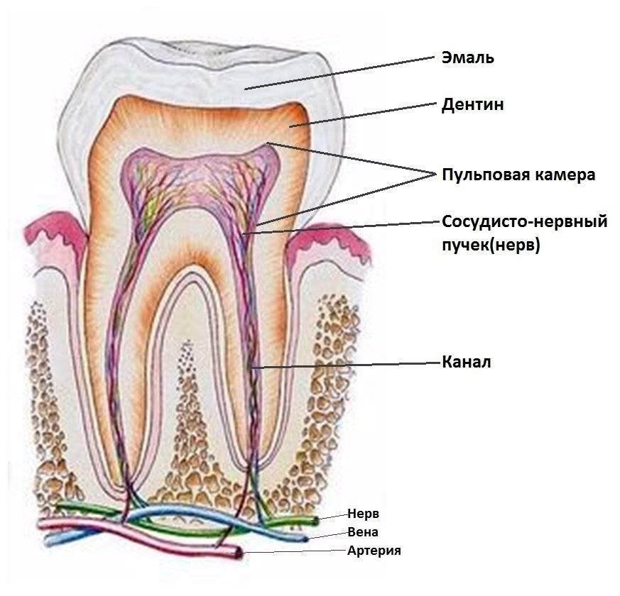 Как убить зубной нерв и успокоить боль в зубе народными средствами в домашних условиях?