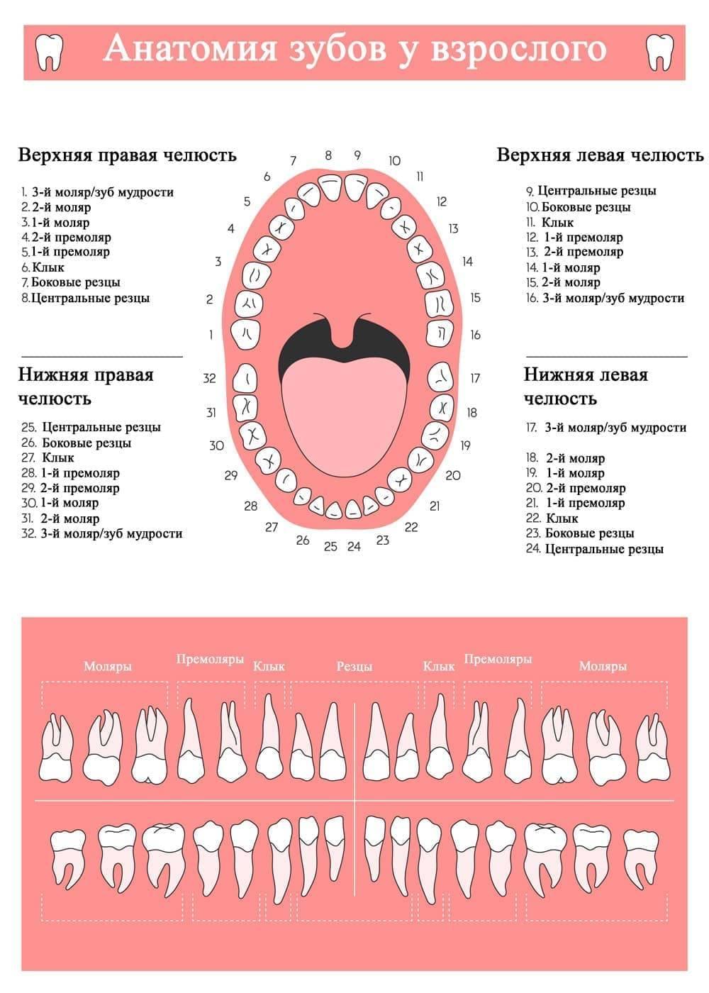 Схемы нумерации зубов в современной стоматологии