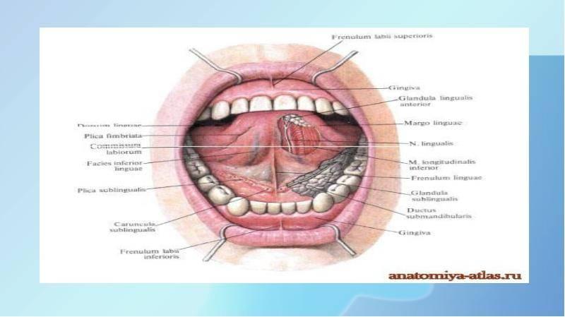 Заболевания и патологии слизистой оболочки рта: обзорный материал