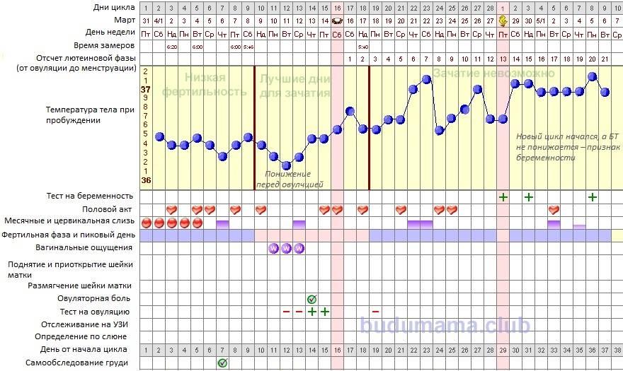 Что такое базальная температура и как её измерять