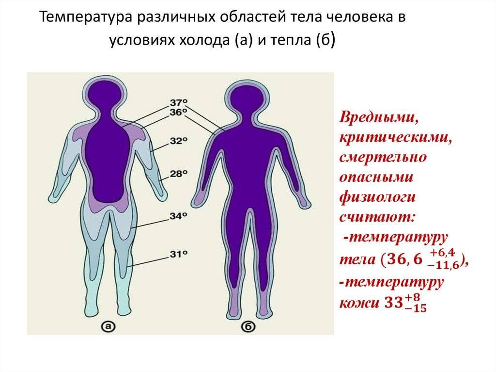 Пониженная температура тела человека – причины, опасности и лечение