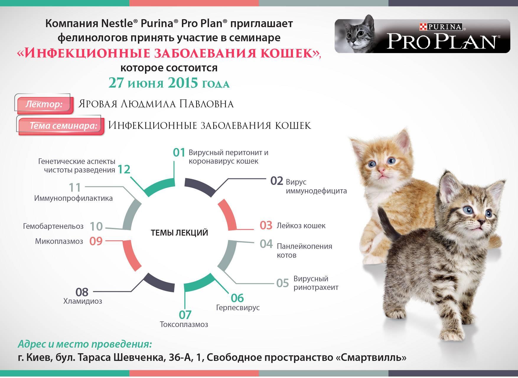 Гингивит у кошек: лечение в домашних условиях