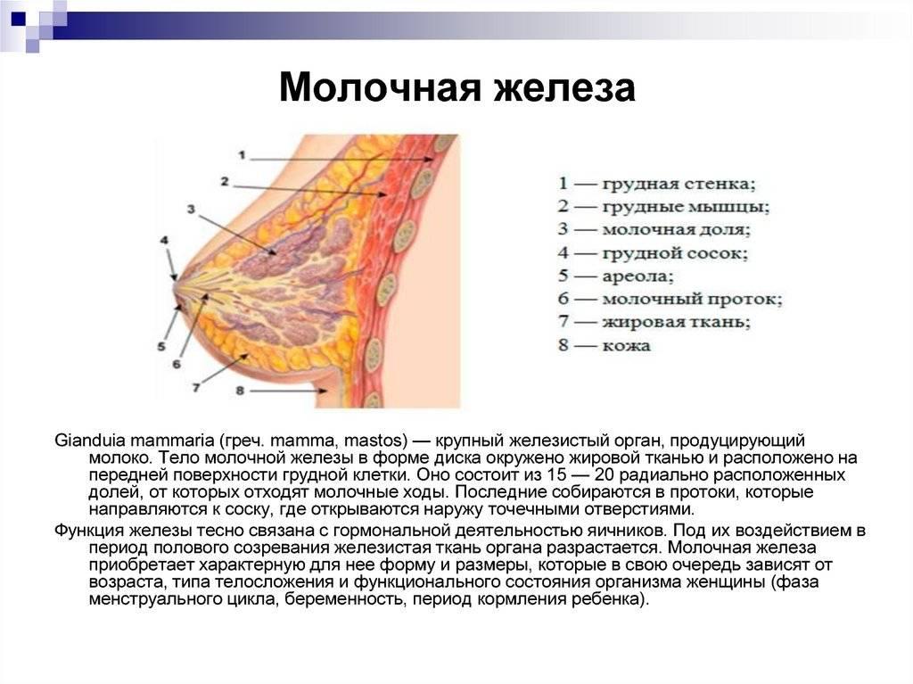 Почему маленькая грудь. как увеличить грудь без операции