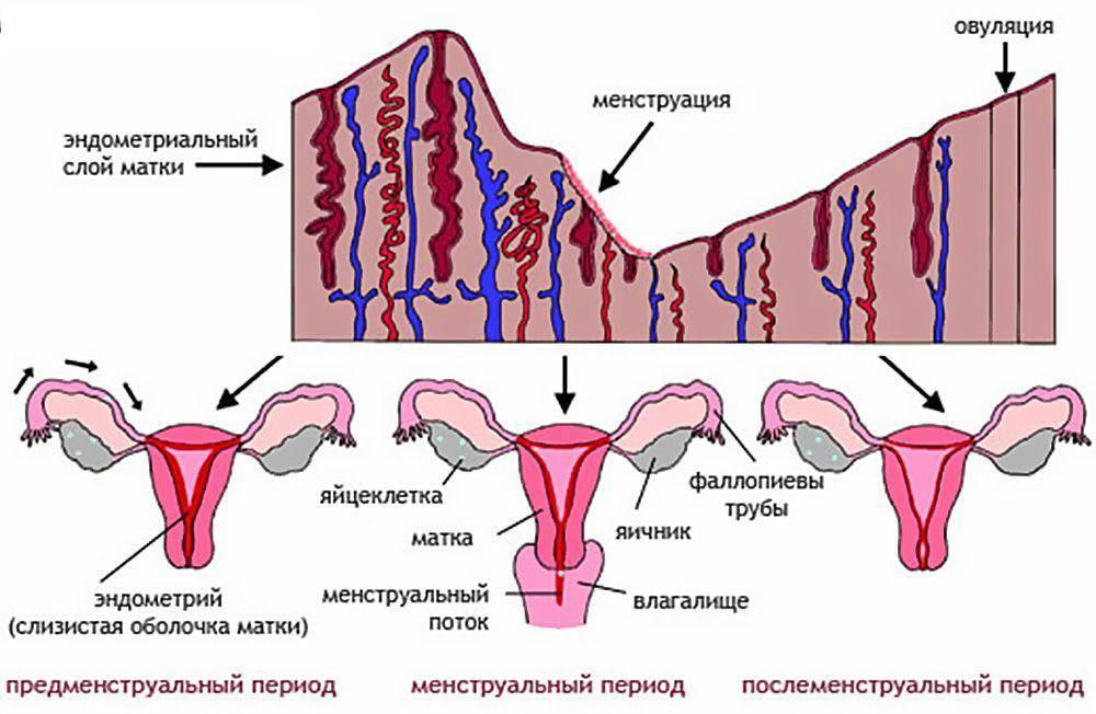 Причины короткого менструального цикла: когда необходимо лечение