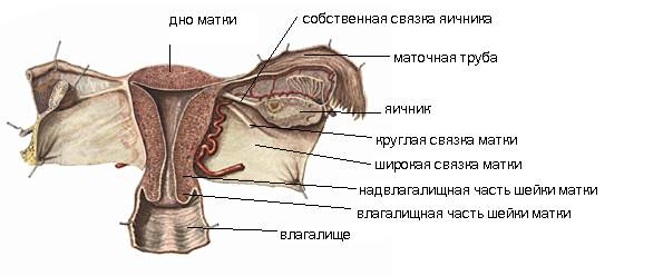 Тонус матки при беременности 2 триместр