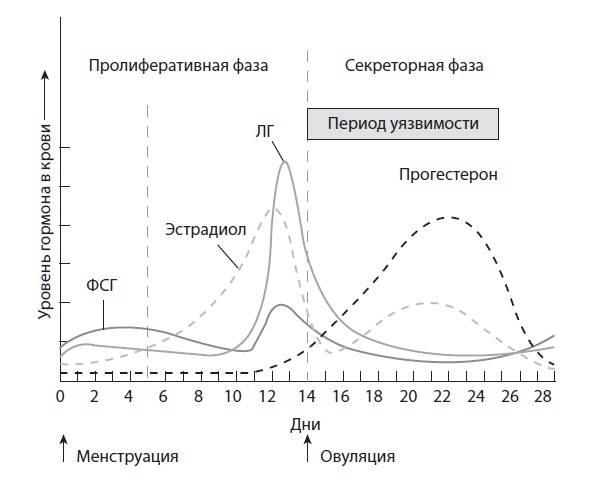 Эстрадиол гормон: норма у женщин, причины и последствия отклонений, коррекция гормонального фона