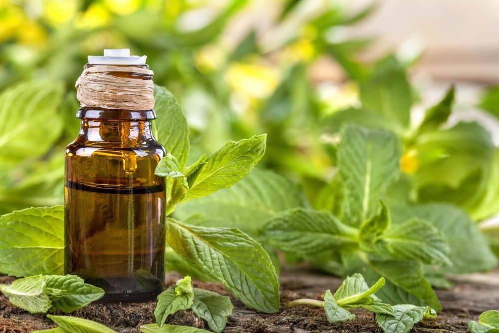 12 свойств и применение масла пачули, использование в косметологии и для денег
