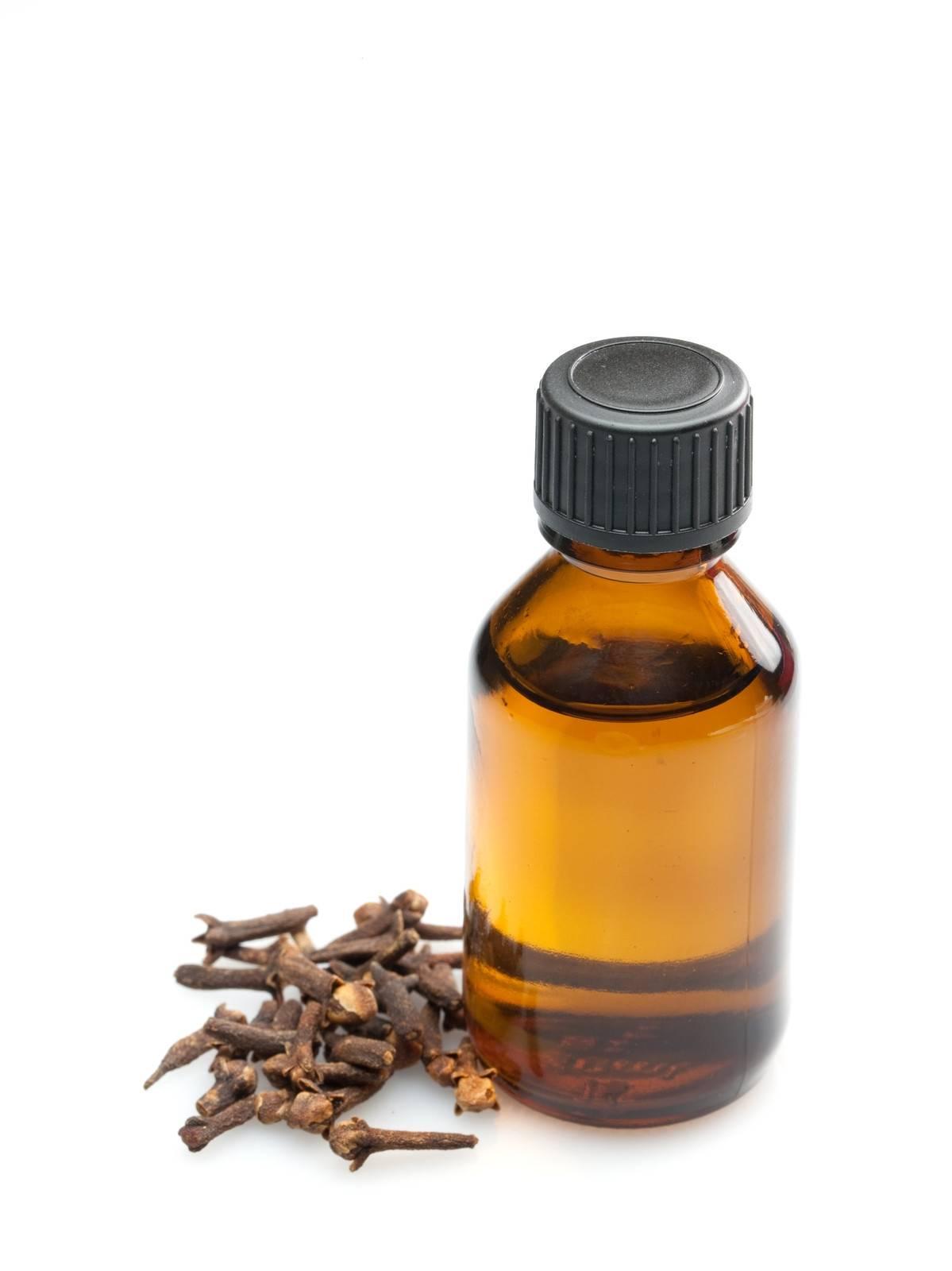 Полезные свойства масла гвоздики и неожиданные сферы применения, выбор эфира