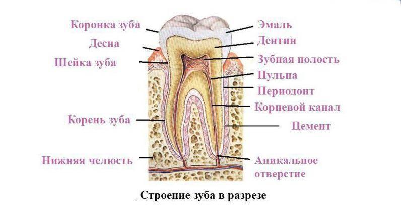 Почему болит нерв в зубе и что можно сделать