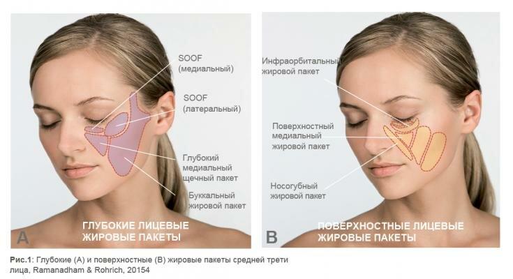 Роль глубоких жировых пакетов в анатомии лица