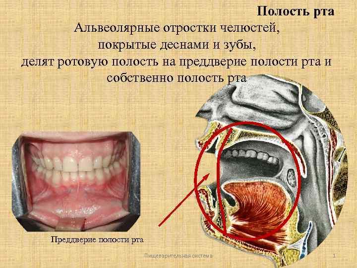 Причины появления и методы лечение альвеолита после удаления зуба