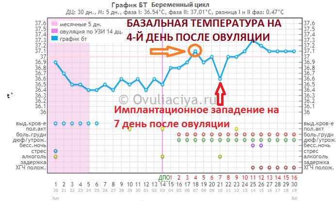 Когда у женщины наступает овуляция? как определить овуляцию по базальной температуре?