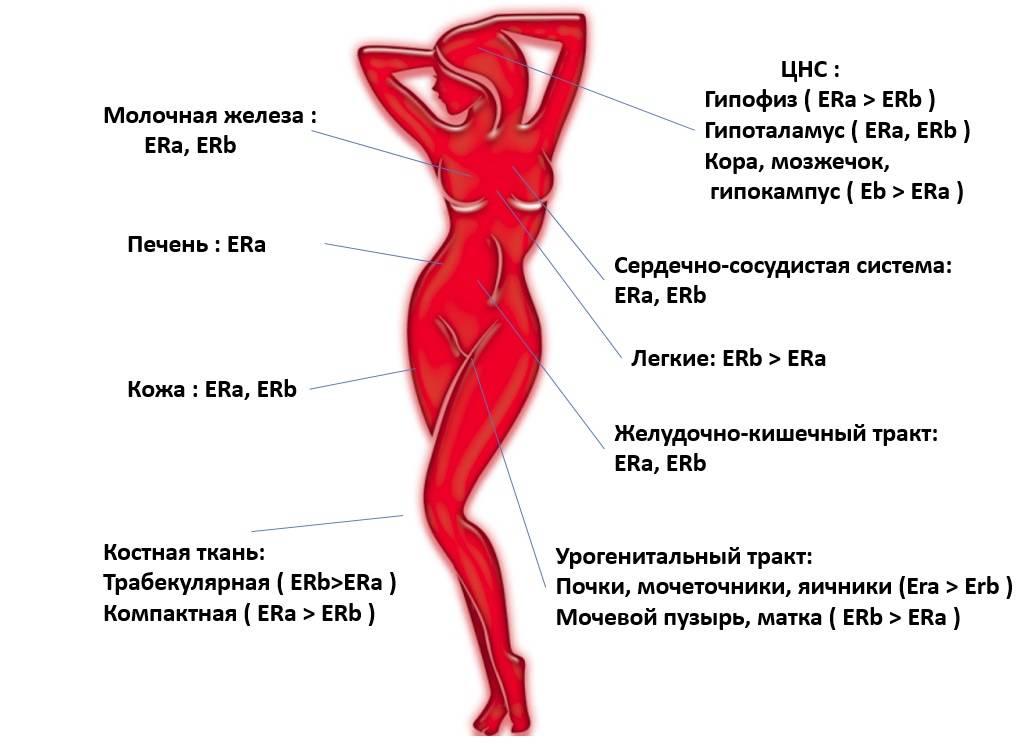 Как повысить эстроген у женщин народными средствами, без гормонов, препараты, продукты питания