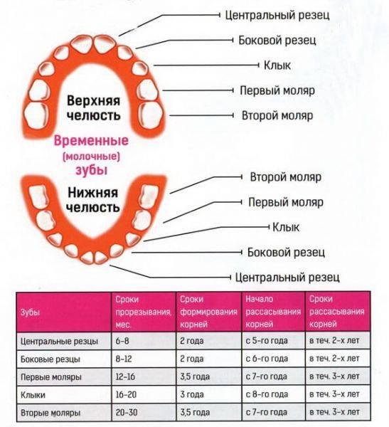 Все ли молочные зубы выпадают у ребенка