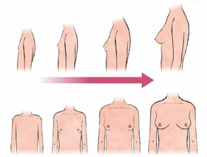 Во сколько лет заканчивается рост груди у девочек