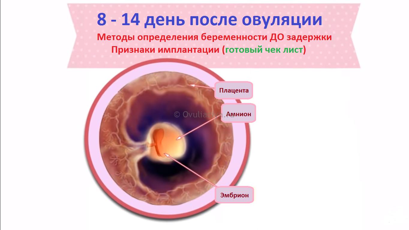 Как до задержки узнать произошло ли зачатие сразу после овуляции?