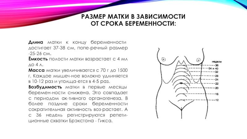 Длина шейки матки на 30 неделе беременности