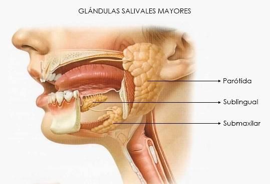Заболевания слюнных желез: симптомы, лечение, диагностика в стоматологии