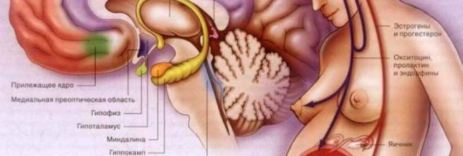 Как народными средствами снизить уровень пролактина у женщин