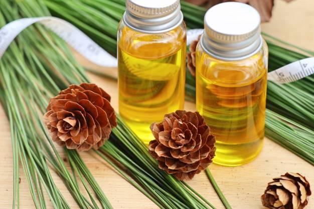 Эфирное масло сосны: зелёный эликсир для красоты и здоровья