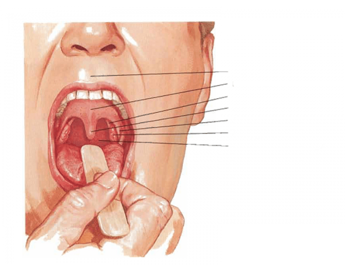 Альвеолы во рту — что это такое и где находятся?