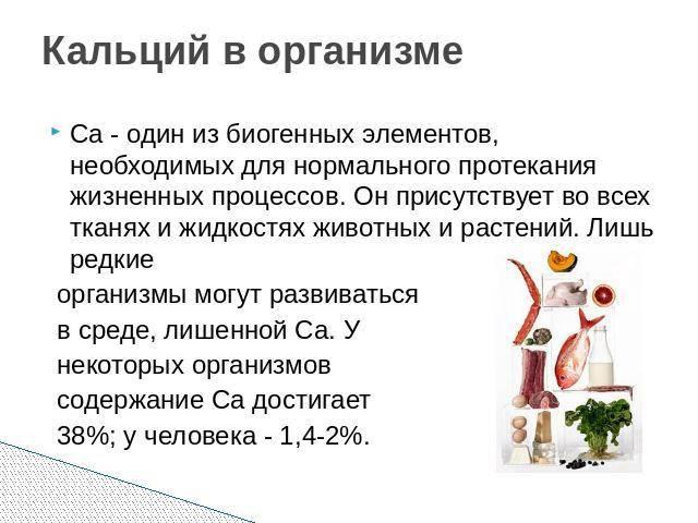 Кальций содержащие продукты: на сколько важен кальций для человека?