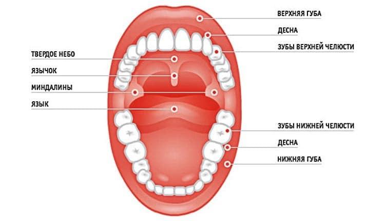 Болят нижние зубы без видимых причин