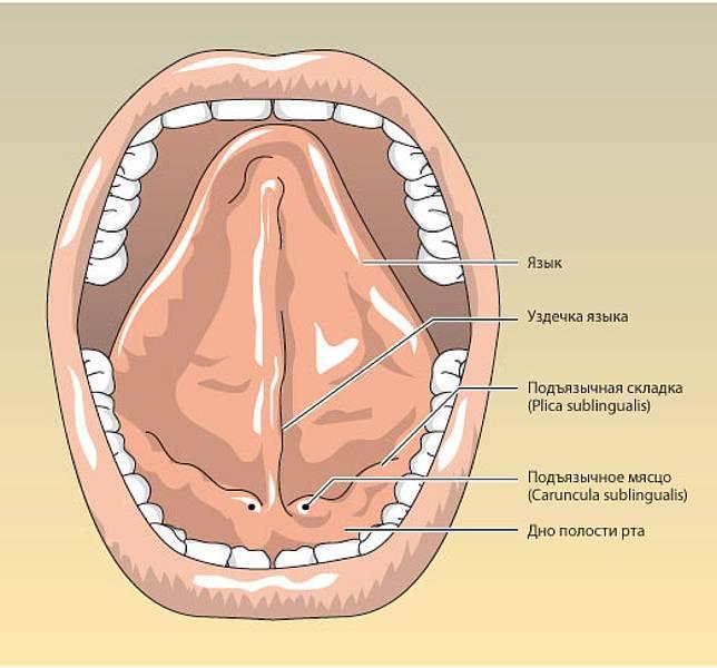Альвеолит после удаления зуба – симптомы и лечение