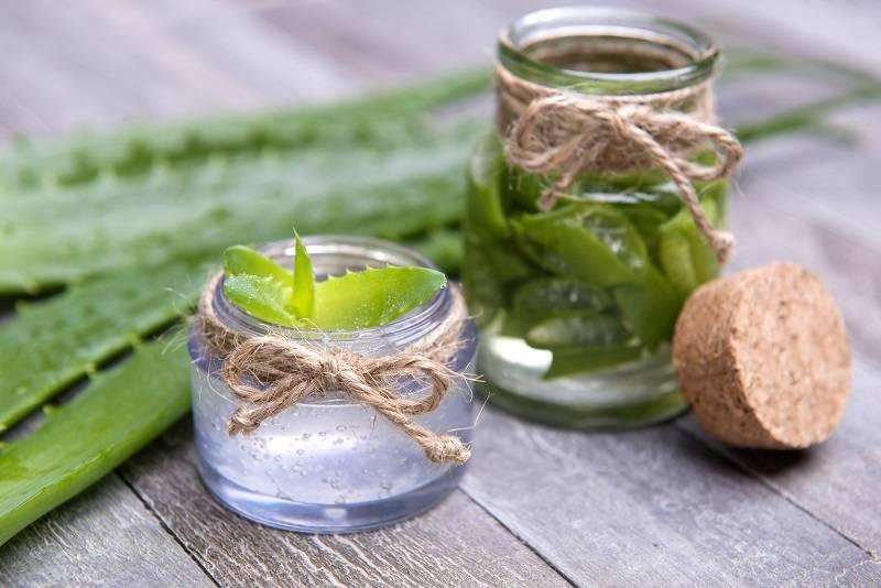 Целебный сок алоэ — от каких заболеваний помогает и как правильно принимать его внутрь?