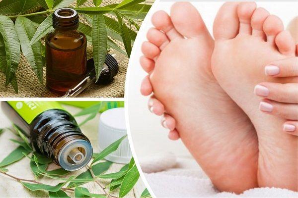 Эфирное масло чайного дерева для лечения грибка: применение и отзывы